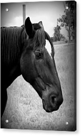 Acrylic Print featuring the photograph Ebony Beauty by Laurie Perry