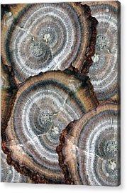 Eccentrically Concentric Acrylic Print by Sue Duda