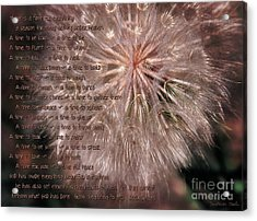 Ecclesiastes Seasons Acrylic Print by Constance Woods