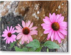 Acrylic Print featuring the photograph Echinacea by Jesslyn Fraser