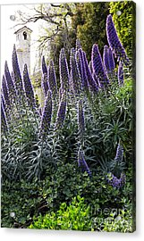 Acrylic Print featuring the photograph Echium And Tower by Kate Brown