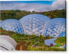 Eden Project Biomes Acrylic Print by Chris Thaxter