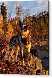 Acrylic Print featuring the photograph Edge Of Glory by James Peterson