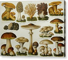 Edible Mushrooms Acrylic Print by Science Source