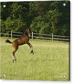 Acrylic Print featuring the photograph Eek   Whazzat? by Carol Lynn Coronios