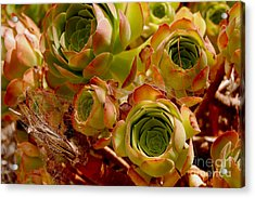Eggplant Blossoms Acrylic Print by Andrea Aycock