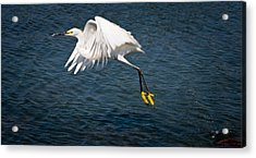 Acrylic Print featuring the photograph Egret Aloft by Janis Knight