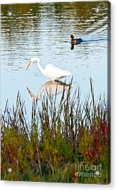Acrylic Print featuring the photograph Egret And Coot In Autumn by Kate Brown