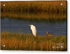 Egret And Duck Acrylic Print