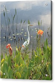Egret And Iris Acrylic Print