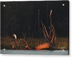 Acrylic Print featuring the photograph Egret And Osprey Sunrise by Deborah Smith