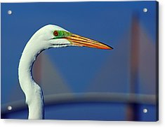 Egret And Skyway II Acrylic Print by Daniel Woodrum