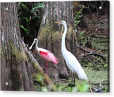 Egret And Spoonbill Acrylic Print by Theresa Willingham