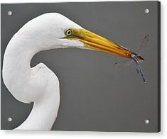 Egret And The Dragonfly Acrylic Print by Paulette Thomas