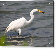 Egret At Lunch Acrylic Print