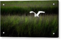 Acrylic Print featuring the photograph Egret At Pawleys Island by Frank Bright