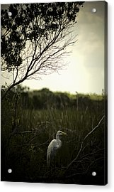 Acrylic Print featuring the photograph Egret At Sunset by Bradley R Youngberg