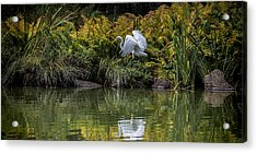Acrylic Print featuring the photograph Egret At The Lake by Chris Lord