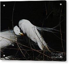 Egret Bird City At Avery Island Louisiana Acrylic Print