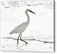 Egret Acrylic Print by Camille Lopez