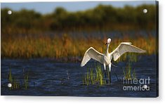 Egret Dancer Acrylic Print