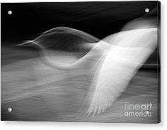 Acrylic Print featuring the photograph Egret Fantasy In Black And White by Anne Rodkin