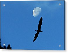 Acrylic Print featuring the photograph Egret Flight by Charlotte Schafer