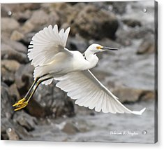 Egret Flight Acrylic Print
