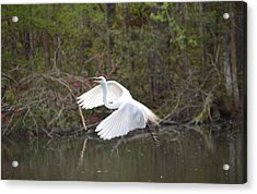 Over The Lagoon Acrylic Print by Judith Morris