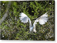 Taking Off Acrylic Print by Judith Morris