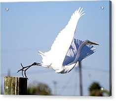 Acrylic Print featuring the photograph Egret In Flight by Linda Cox