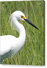 Acrylic Print featuring the photograph Egret In The Sound by Greg Graham