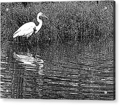 Egret In The Thicket Acrylic Print