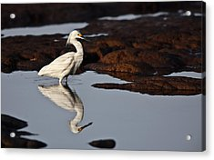 Acrylic Print featuring the photograph Egret In Tide Pool  Mg_9631 by David Orias