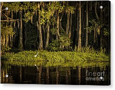 Egret On Caddo Lake Acrylic Print