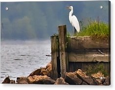 Egret On Dock Acrylic Print by Bill Perry