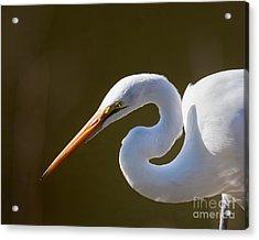 Egret Portrait-2 Acrylic Print by Dale Nelson