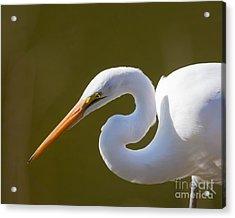 Egret Portrait Acrylic Print by Dale Nelson