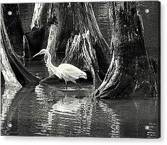 Egret Solitude Acrylic Print