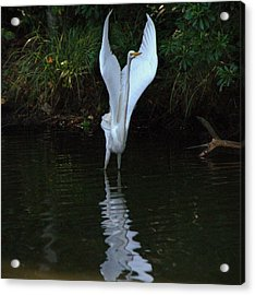 Acrylic Print featuring the photograph Egret Take Off by Charlotte Schafer