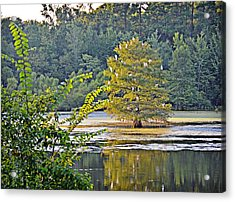 Egret Tree Acrylic Print by Linda Brown