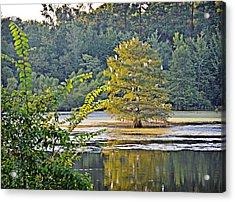 Egret Tree Acrylic Print