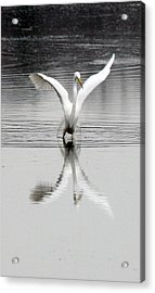 Egret Acrylic Print by Valerie Wolf
