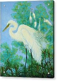 Egrets In Rookery - 20x16 Acrylic Print