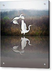 Egrets In The Fog Acrylic Print