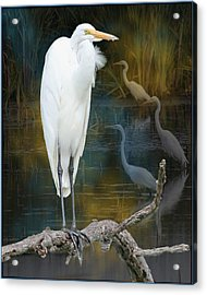 Egrets Acrylic Print by John Kunze