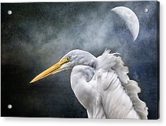 Acrylic Print featuring the photograph Egret's Moon by Brian Tarr