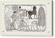 Egyptian Painting Acrylic Print by Litz Collection