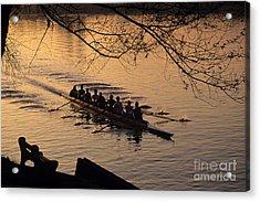 Eight Man Crew Rowing Along Montlake Cut  Acrylic Print
