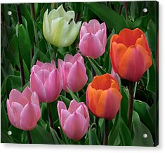 Eight Tulips And One Bee Acrylic Print